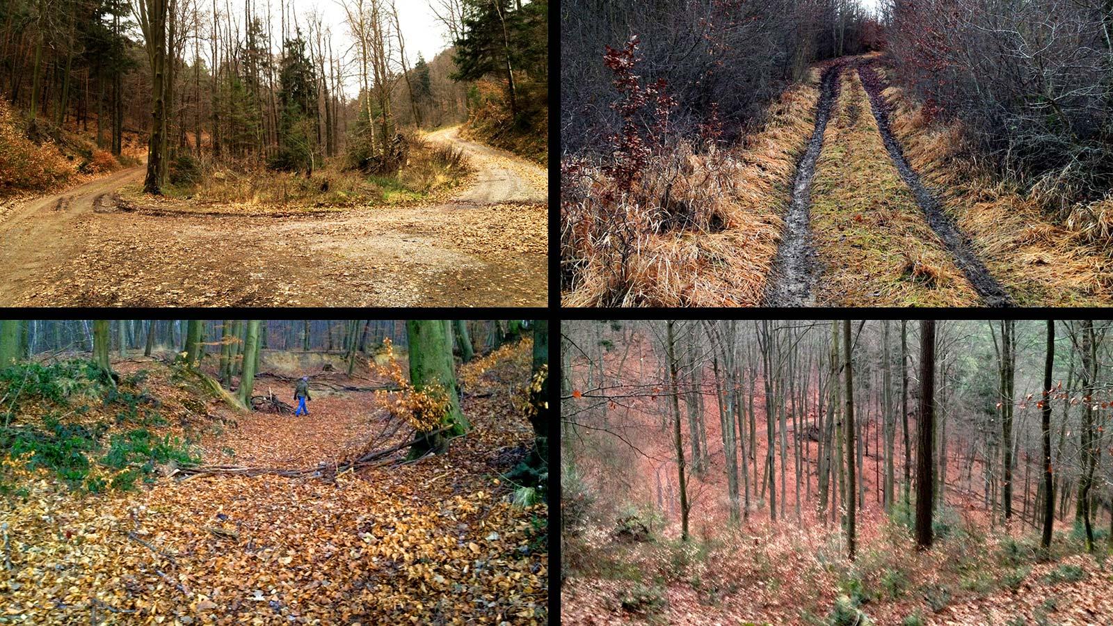 IROutdoor-forest